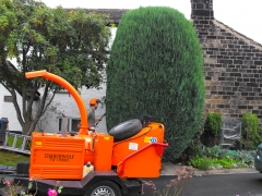 Trimming of large conifer